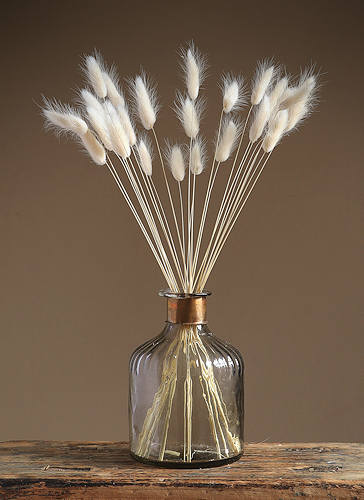 White Bunny Tails Dried Flowers